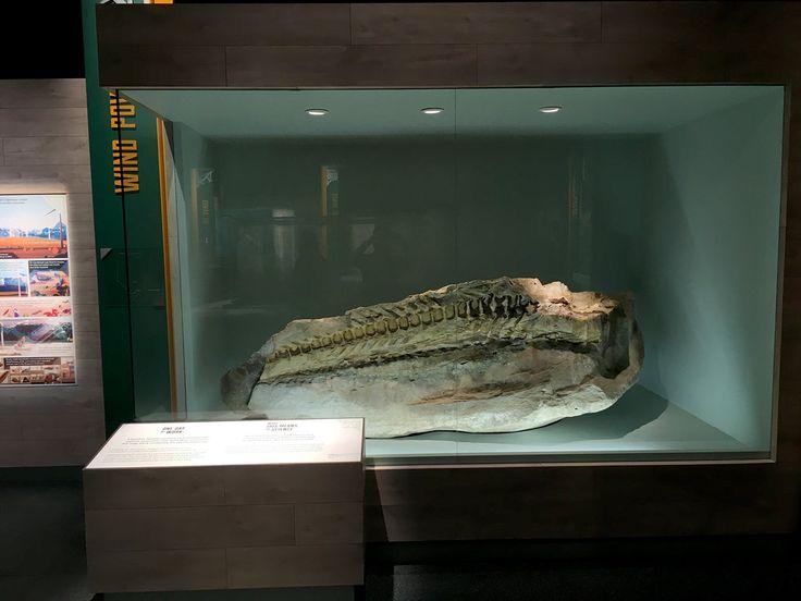 Dinosaur Museum Case