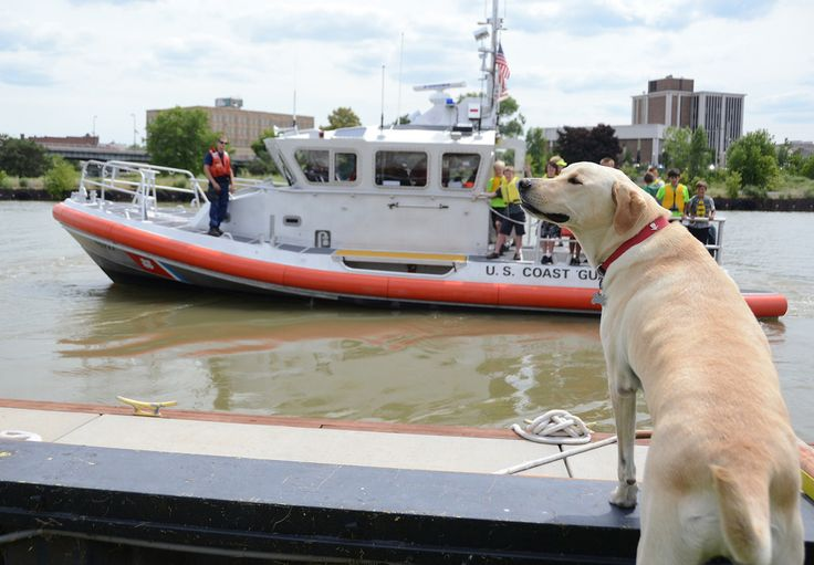 Petty Officer 3rd Class Hawkeye, the station dog and mascot at Coast Guard Station Lorain, Ohio, welcomes home the crew and Spirit of America group, following an underway trip in Lake Erie aboard the stations 45-foot response boat, July 18, 2014. Hawkeye kept a careful watch on them while the group toured the station and got underway on its boats. (U.S. Coast Guard photo by Petty Officer 3rd Class Christopher M. Yaw)