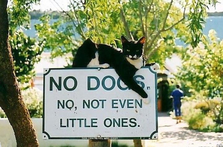 Absolutely no dogs!
