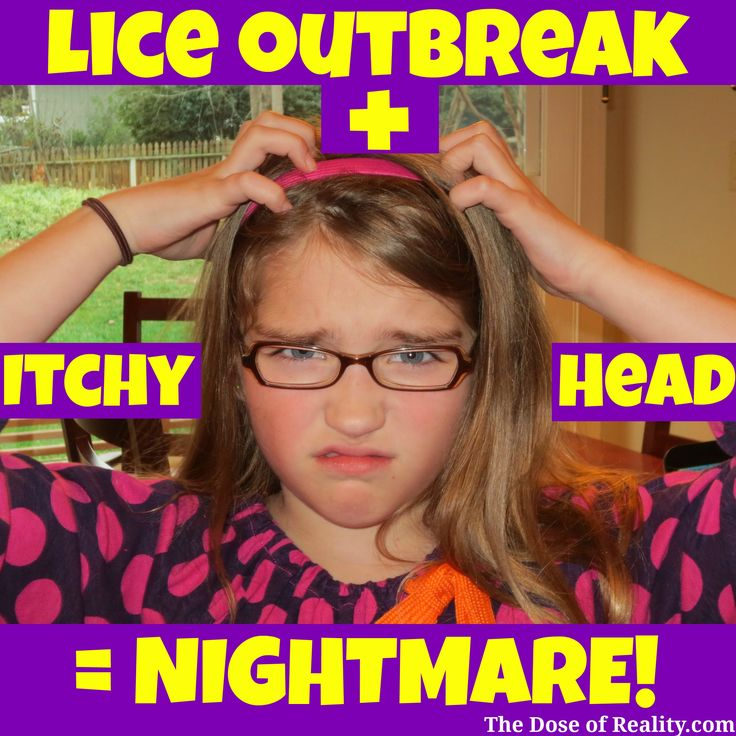 An itchy head plus a lice outbreak equals a mother's nightmare! http://www.thedoseofreality.com/2014/08/20/itchy-head-lice-outbreaka-mothers-nightmare-back-school-style/