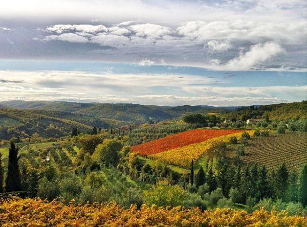 ItalyThe Vineyard, Wine Country, Italian Countryside, Wine Regions, Places, Italian Vineyard, Italy Wine, Romantic Vineyard, Italian Wineries