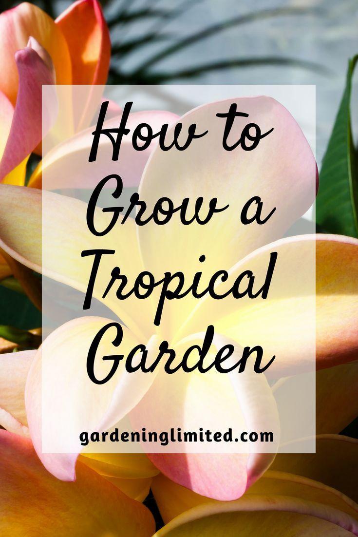 Wie man einen tropischen Garten baut baut einen Garten