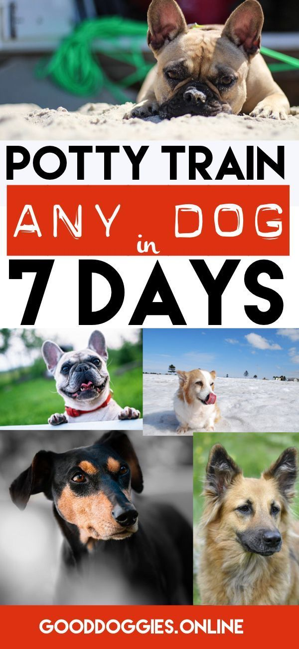 Learn how you can potty train or house train your puppy or adult dog.
