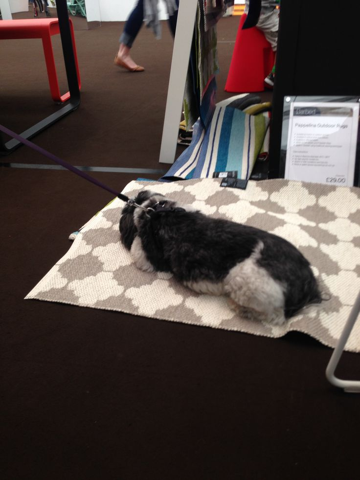 One of our visitors clearly loved our Pappelina rugs!