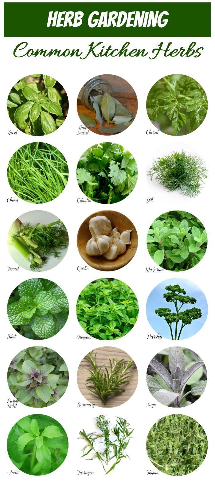 Herb Identification Identifying Fresh Herbs Planting Herbs