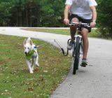 http://bicycling.about.com/od/bikebagsandracks/fr/Springer-Dog-Leash-For-Your-Bike-A-Review.htm