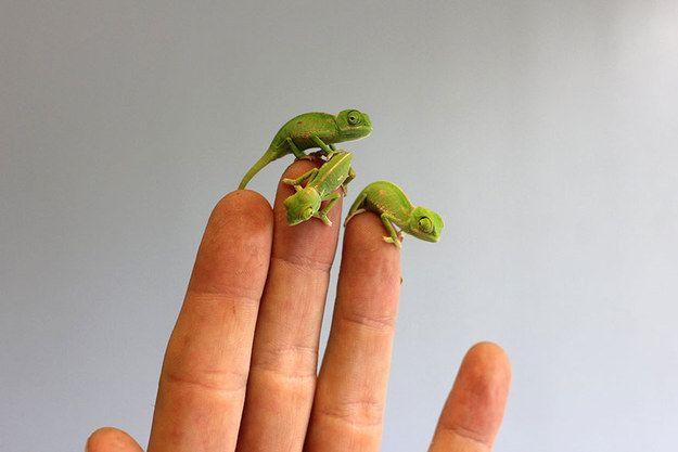 Ces bébés animaux sont si petits et si mignons qu'on les mangerait !