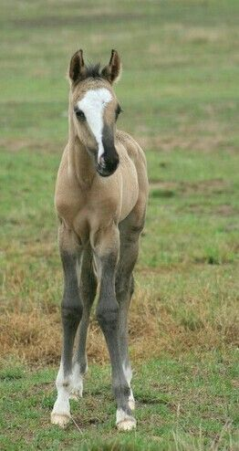 Gorgeous gruella foal! What a face!! REMINDS ME OF MY REBELS FACE. ..Amber
