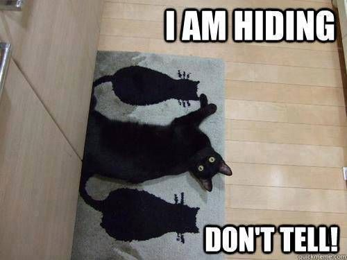 Shhh! The kitty is hiding -- Cat humor lol                                                                                                                                                      More