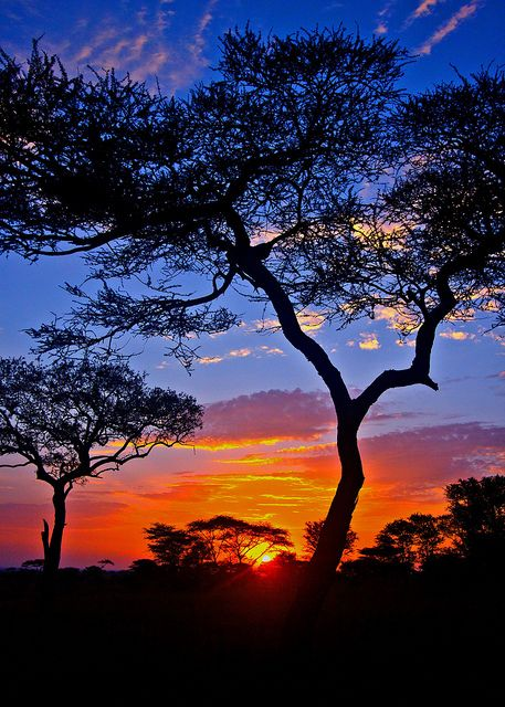 African Sunrise Breathtaking View Of The Serengeti