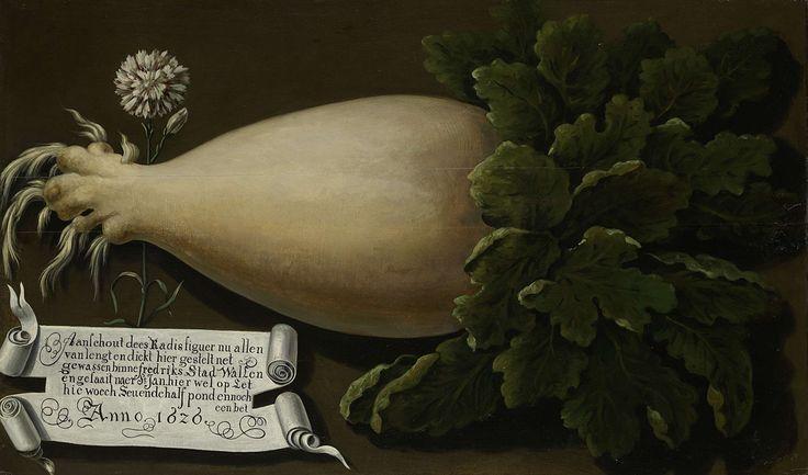 Anonymous | A Giant Radish, Anonymous, 1626 | Een reuzenradijs, met een gewicht van meer dan zeven en een half pond. Links een inscriptie op een blad papier en een anjer.