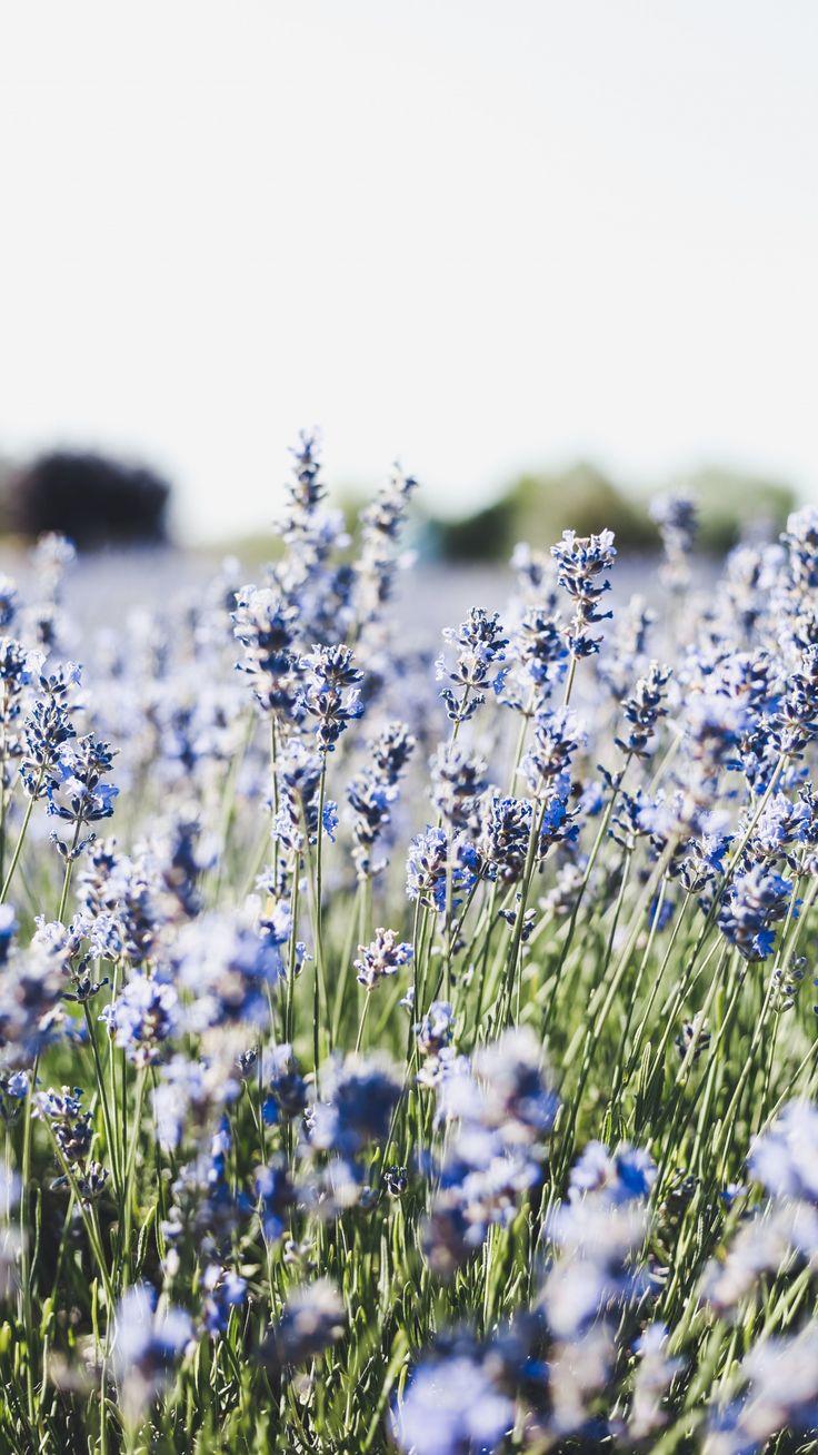 1080×1920 Meadow, blue, small flowers, flora wallpaper