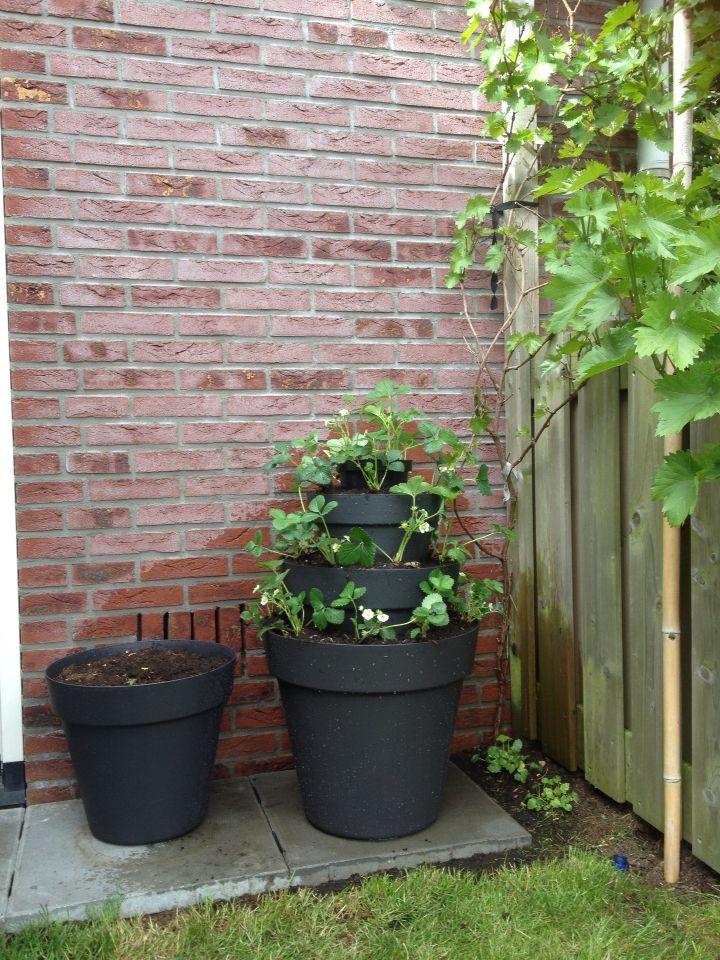 Aardbeien toren. Handig in een kleine tuin of als je aardbeien niet op de grond wilt laten hangen.   Gemaakt van verschillende maten bloempotten, gevuld met aarde, gestapeld.   De aardbeienplanten passen dan precies langs de randen.   ------------   Strawberry tower. Useful in a small garden and your can keep the strawberries of the ground.  DIY