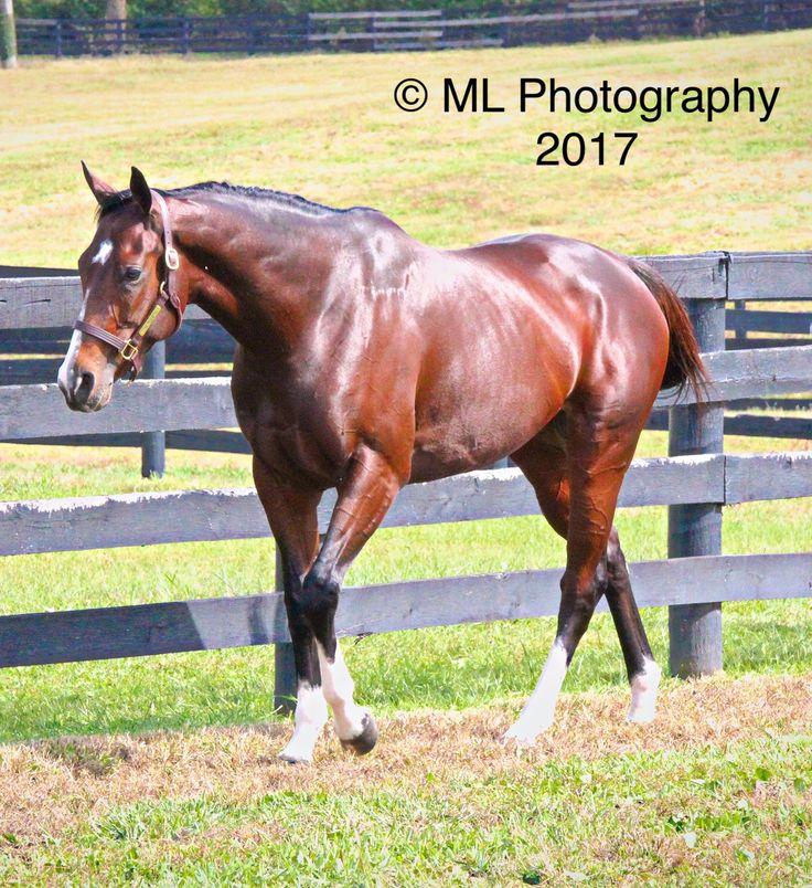 439 best FAMOUS RACE HORSES images on Pinterest   Race ...  439 best FAMOUS...