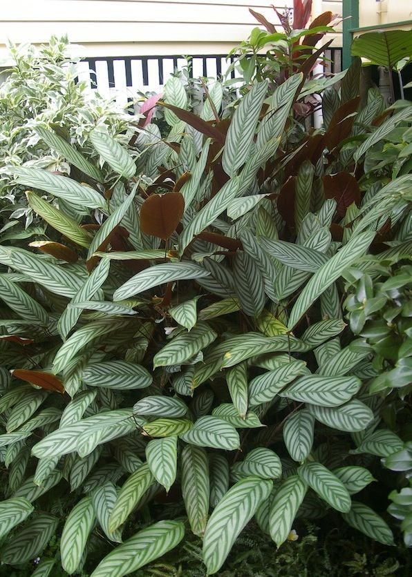 37 best landscape full shade images on pinterest tropical gardens backyard ideas and garden - Indoor plants for shade ...