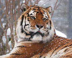 Marwell zoo, fantastic place to visit