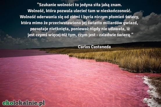 """""""Szukanie wolności to jedyna siła jaką znam. Wolność, która pozwala ulecieć tam w nieskończoność. Wolność oderwania się od ziemi i bycia niczym płomień świecy, która mimo że przeciwstawiono jej światło miliardów gwiazd, pozostaje nietknięta, ponieważ nigdy nie udawała, iż jest czymś więcej niż tym, czym jest - zaledwie świecą."""" Carlos Castaneda"""