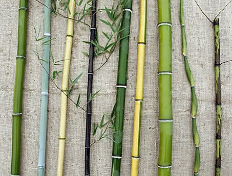 Anybody mind helping to fill a quick online survey about Bamboo Construction?