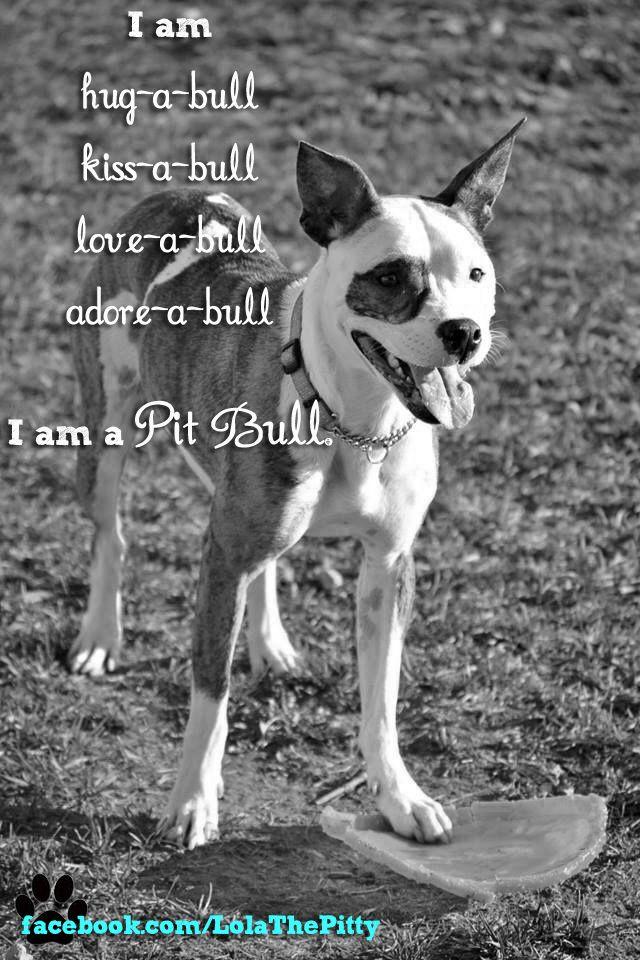 I am hug-a-bull, kiss-a-bull, love-a-bull, adore-a-bull. I am a pit bull. @Lola The Pitty