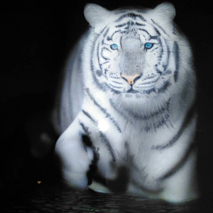 Tiger airbrush At