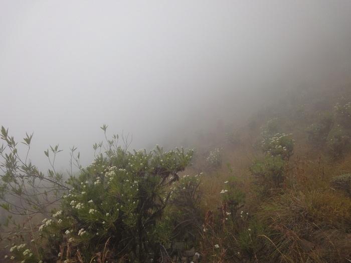 Misty edelweiss heaven. Photo by Rini Raharjanti