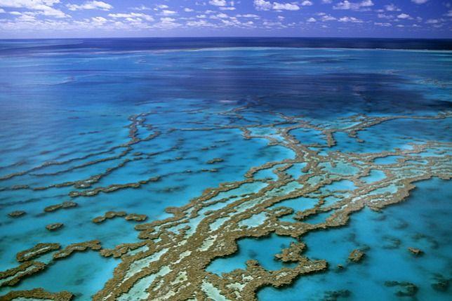 Az ausztrál Nagy-korallzátony legsúlyosabb korallfehéredése zajlik