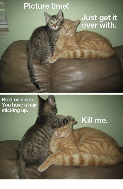 27 best cat memes images on pinterest hair fixing cat meme sciox Image collections