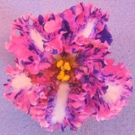 9a24275c59a6eaf7e2c34b9492484aea--african-violet-houseplants Varigated Trailing Houseplants on trailing weeds, trailing begonias, trailing bamboo, trailing bouquets, trailing pottery, trailing verbena, trailing plants, trailing african violets, trailing geraniums,