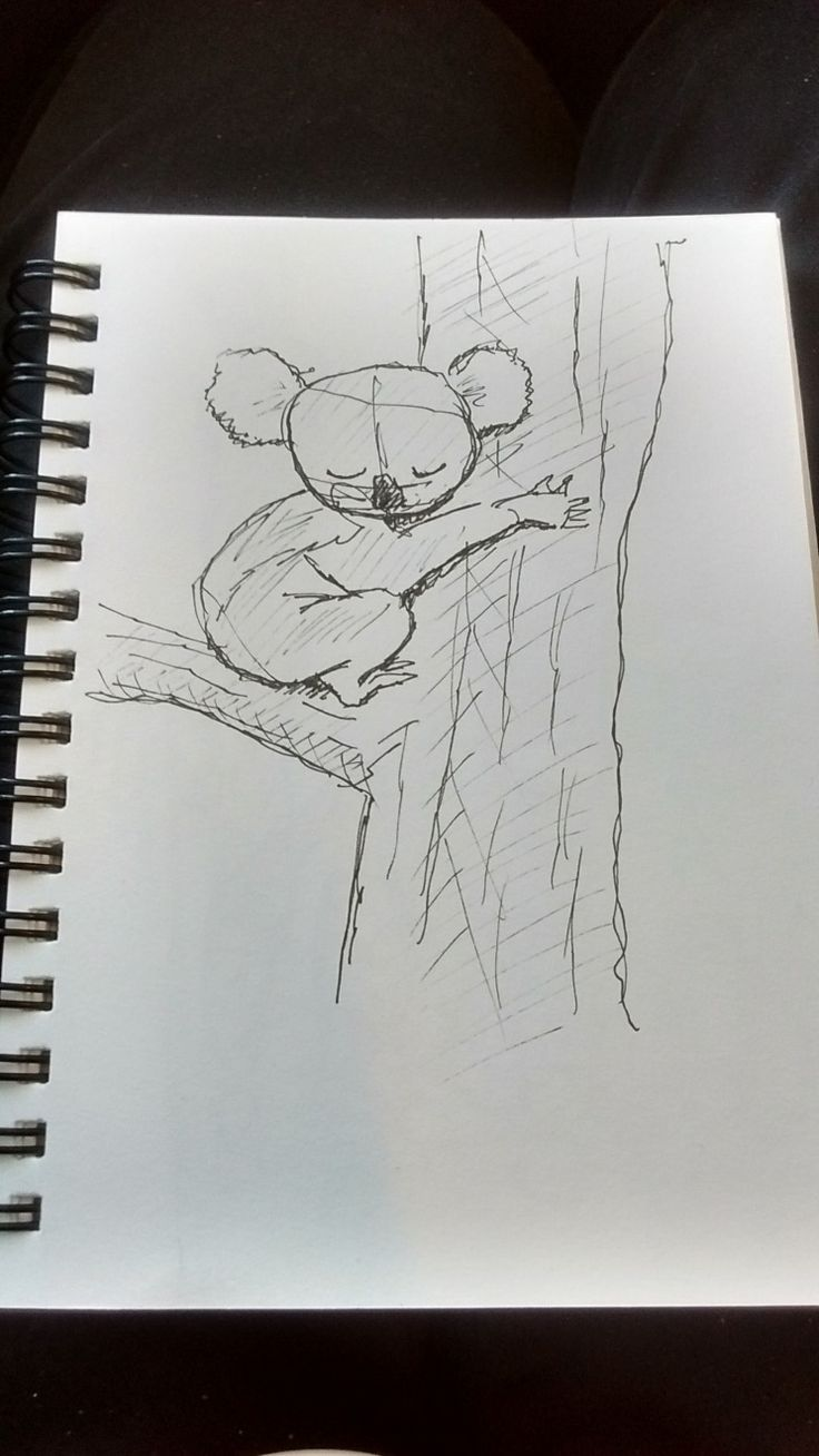 On Wednesday's lunch time walk at Whites Hill Reserve I cam across this gorgeous koala with big fluffy ears. So cute of course I had to sketch the marsupial.  It feels like ages since I have seen a koala there.
