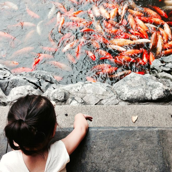 A quiet moment in Shanghai with the family of Tatum Hawkins. Find out where they like to hang out at http://www.suitcasesandstrollers.com/interviews/view/china-with-kids-shanghai-insider?l=all #GoogleUs #suitcasesandstrollers #travel #travelwithkids #familytravel #familytraveltips #traveltips #fish #koi #fishofinstagram #hello #animalwatching #fishpond #China #Shanghai
