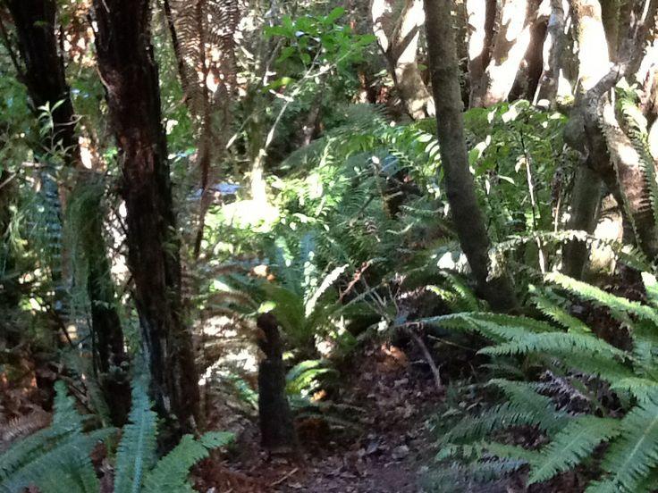 Bush Horoeka Track Stokes Valley New Zealand2014