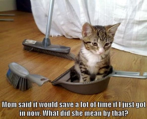 70 Cute and Funny Cat Pictures