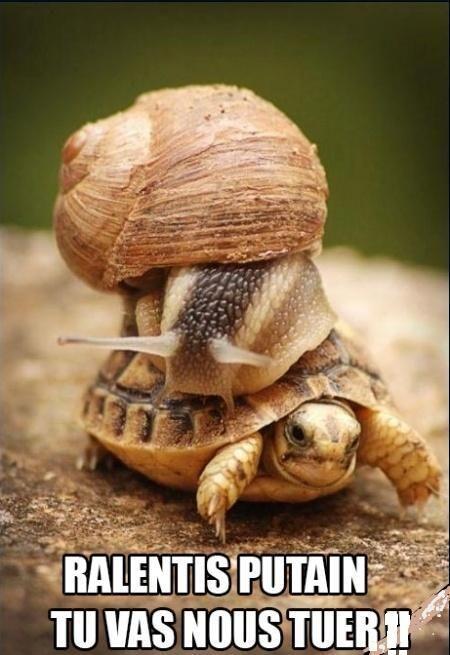 Ralentis putain, tu vas nous tuer! #escargot #humor #quote