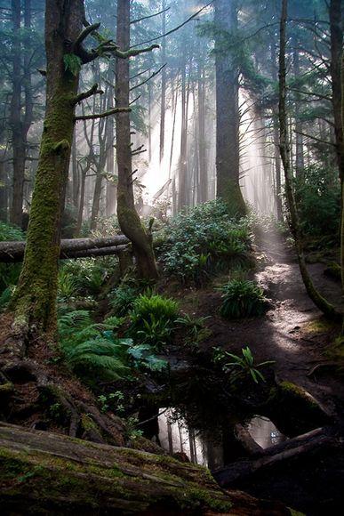 A foggy morning on the Juan de Fuca trail near Mystic Beach, Vancouver Island, British Columbia
