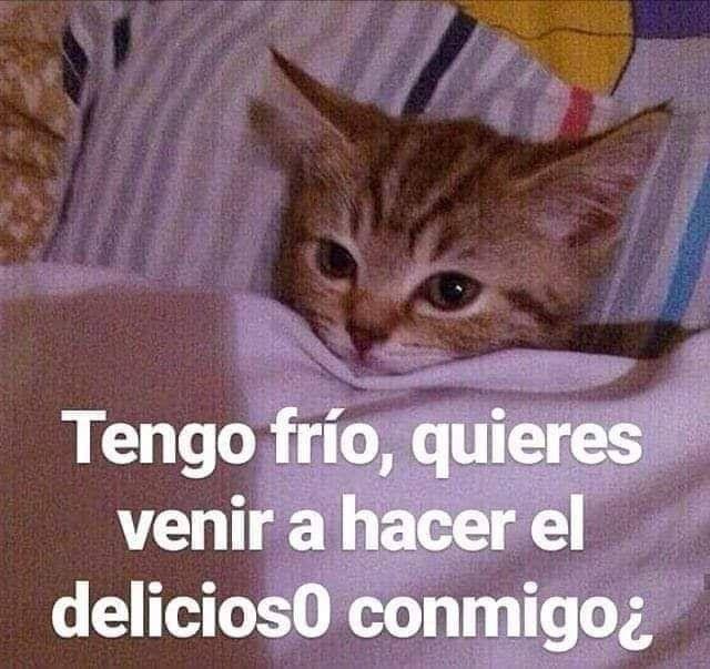 Pin De Daniely En Memes Amor Memes Divertidos Frases Tontas Memes Romanticos