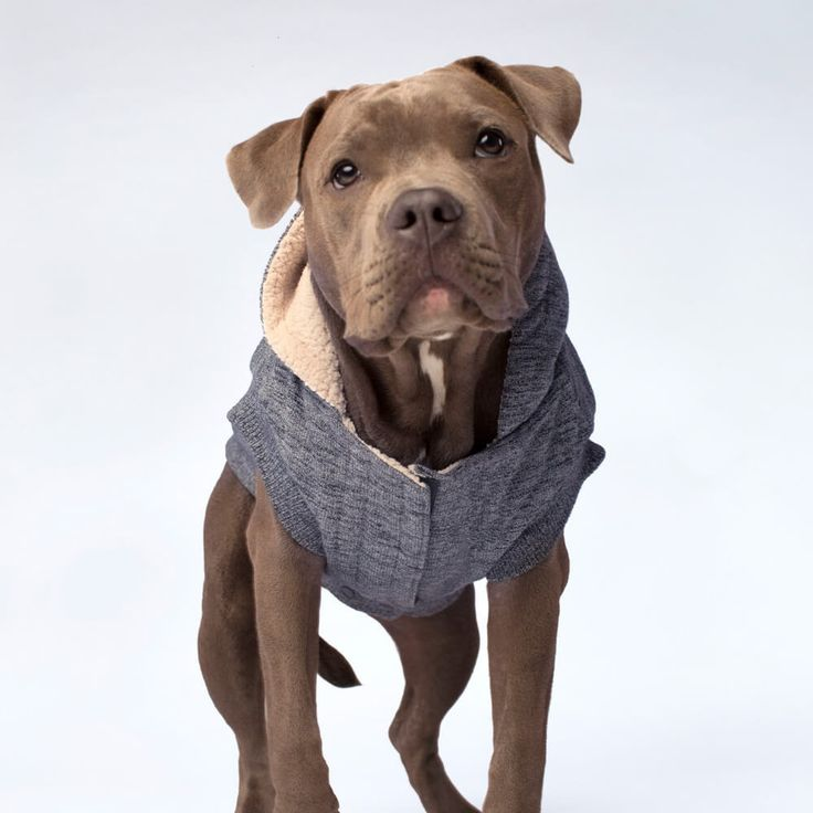 Canada Pooch Cozy Caribou Hoodie in Marled Grey | The ultimate cozy experience: our ultra-soft sherpa lined dog hoodie