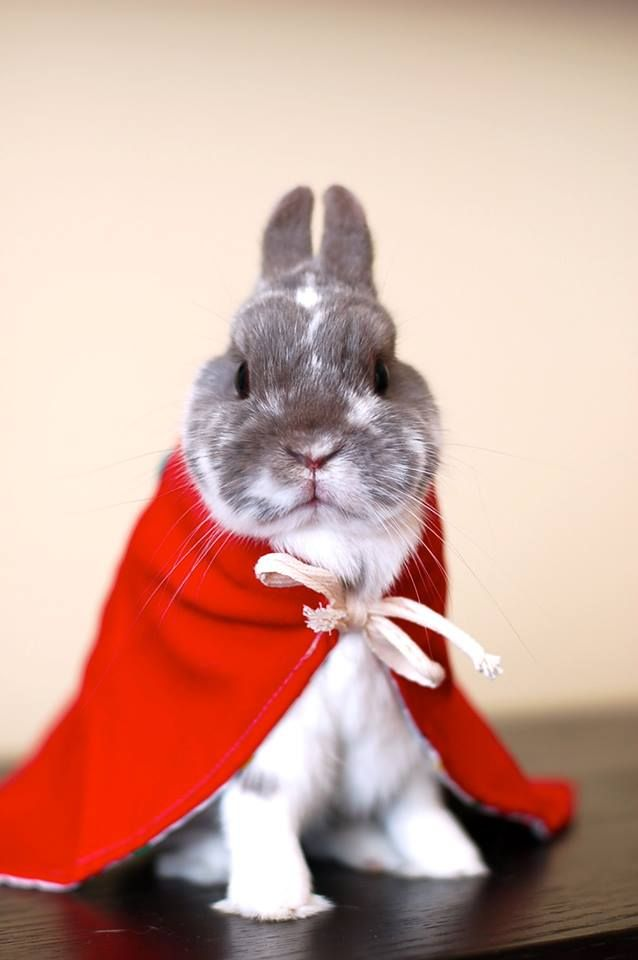 Faster than a speeding bullet.....more powerful than a locomotive.......able to leap tall buildings in a single bound.........it is super bunny .