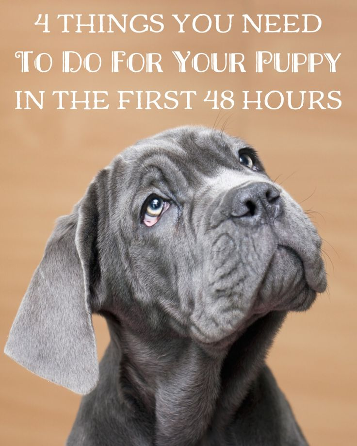 Bringing home a new puppy? Here's 4 things you need to do in the first 48 hours to keep him safe, happy, & healthy!