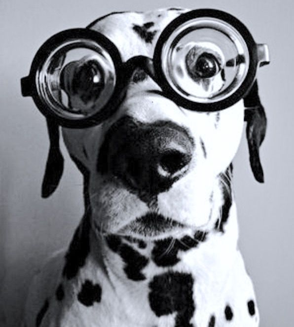 Image result for animals in glasses