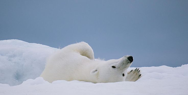 46 Funny Sleeping Facts. - Random Facts