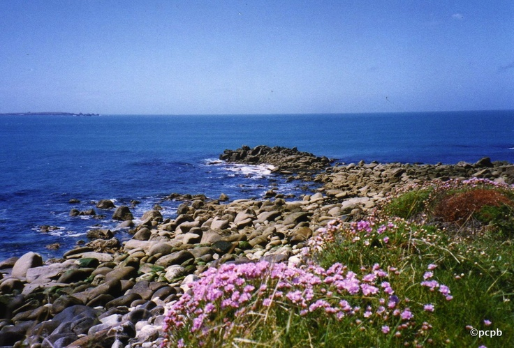 Sea pinks on St Mary's, Isles of Scilly