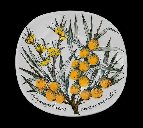 Esteri Tomula Hippophaes Rhamnoides 80s RARE Botanical Wall Plate Arabia Finland | eBay