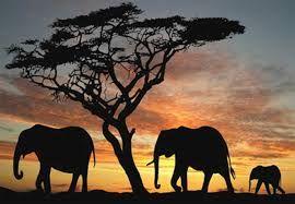 Risultati immagini per elefanti