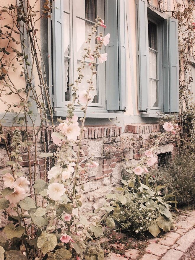 blue-shutters-french-style-hollyhocks