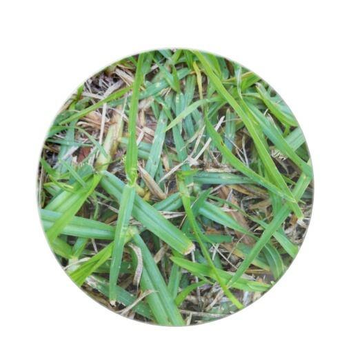 GRASS PLATE @ http://www.zazzle.com.au/silverlime2013 #Camouflage