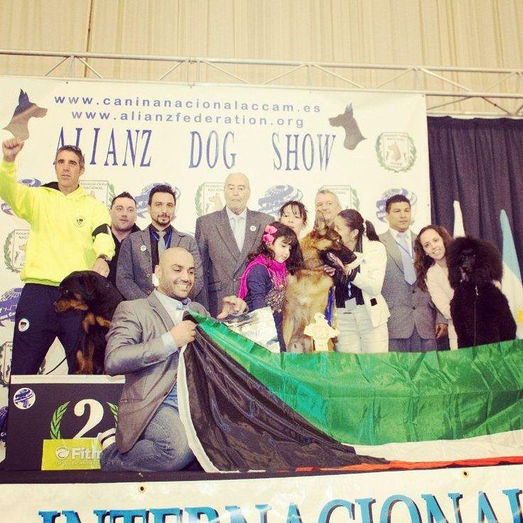 PODIUM BEST IN SHOW: 1.Pastor Alemán 2.Rottweiler 3.Caniche Gigante