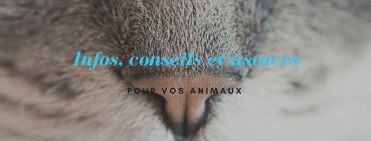 Groupe Facebook d infos, de conseils et d astuces pour vos animaux