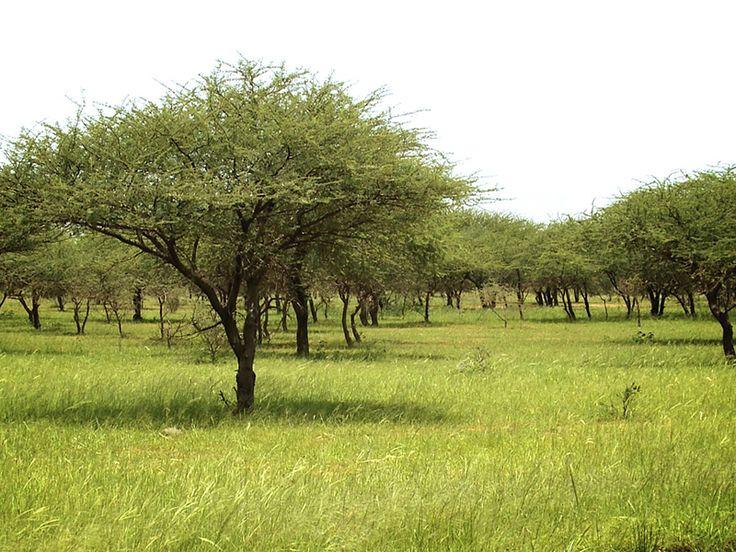 Why plant trees in Burkina Faso? – Ecosia