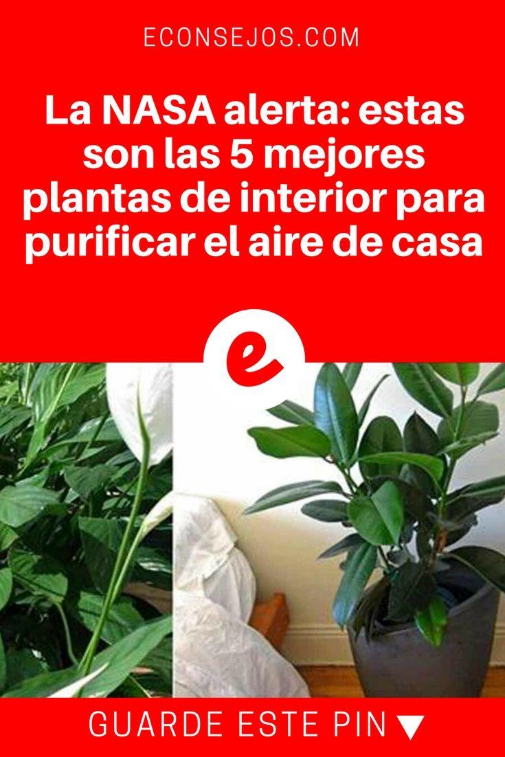 Plantas para purificar el aire   La NASA alerta: estas son las 5 mejores plantas de interior para purificar el aire de casa   Estas plantas no solo eliminan los componentes tóxicos, además son muy fáciles de cuidar.
