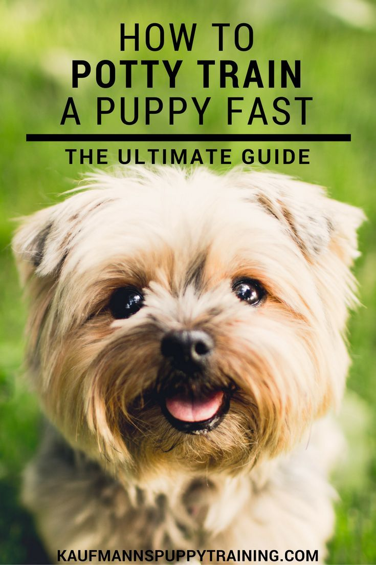 To potty train your puppy can be a challenge...Here's our ultimate guide from which you can pick and choose to set you and your puppy up for potty training success fast. Read more at kaufmannspuppytraining.com @KaufmannsPuppy #dogtraining #puppytraining #pottytraining